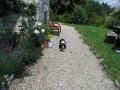 PicNick Franco Suisse_2