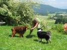 PicNick Franco Suisse_4