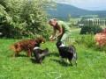 PicNick Franco Suisse_9