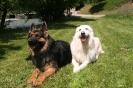 Belle et Haïko
