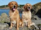 Hotchi et Duti en vacances en Bretagne