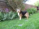 Miss Molly 15 ans et toutes ses dents!