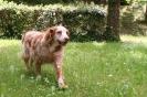 Mon loulou Orion, 14 ans et demi