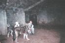 Une vie de chiens_102