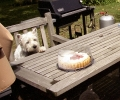 Une vie de chiens_103