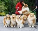 Une vie de chiens_109