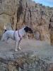 Une vie de chiens_110