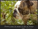 Une vie de chiens_114