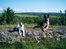 Une vie de chiens_117