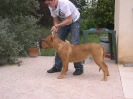Une vie de chiens_129