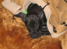Une vie de chiens_154