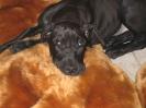 Une vie de chiens_157
