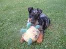 Une vie de chiens_167