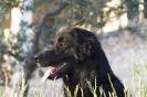Une vie de chiens_174