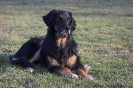 Une vie de chiens_175