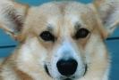 Une vie de chiens_181