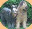 Une vie de chiens_189