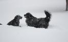 Une vie de chiens_18