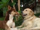 Une vie de chiens_196