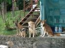 Une vie de chiens_197
