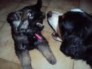 Une vie de chiens_1