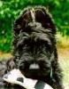 Une vie de chiens_230