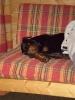 Une vie de chiens_235