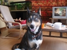 Une vie de chiens_245