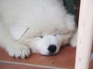 Une vie de chiens_255
