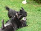 Une vie de chiens_257