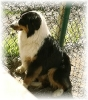 Une vie de chiens_258