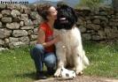 Une vie de chiens_263