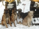 Une vie de chiens_264