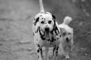 Une vie de chiens_272