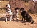 Une vie de chiens_275