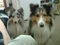 Une vie de chiens_285