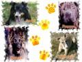 Une vie de chiens_322