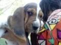 Une vie de chiens_325
