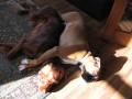 Une vie de chiens_326