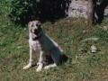Une vie de chiens_337
