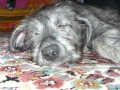 Une vie de chiens_348