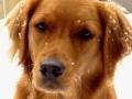 Une vie de chiens_358