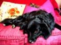 Une vie de chiens_367