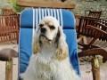 Une vie de chiens_371
