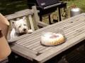 Une vie de chiens_379