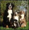 Une vie de chiens_3