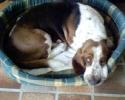 Une vie de chiens_44