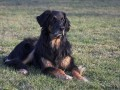 Une vie de chiens_451