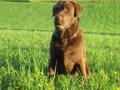 Une vie de chiens_452