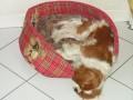 Une vie de chiens_455